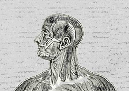 Man's Head and Neck