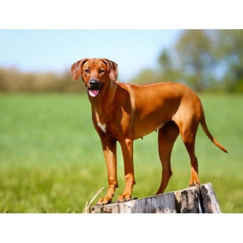 Medium Crop Of Least Shedding Dogs