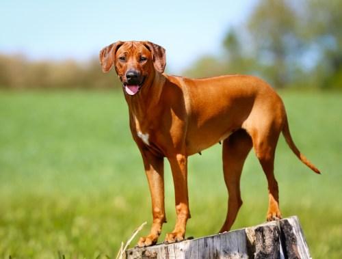Medium Of Least Shedding Dogs