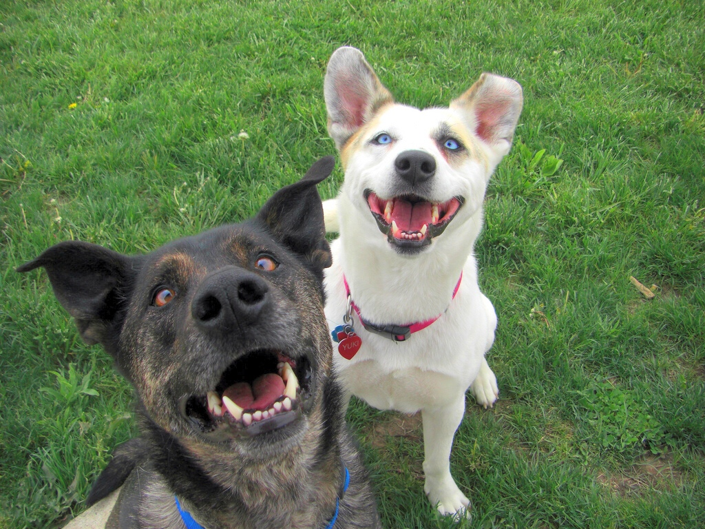 Appealing Dogs Pumped Hump Day Dogs Pumped Hump Day Healthy Paws Pet Insurance Why Do Dogs Hump Or Dogs Why Do Dogs Hump After Being Fixed bark post Why Do Dogs Hump