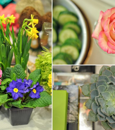 Bloggers in Bloom + Arkansas Flower & Garden Show GIVEAWAY