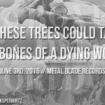 if-these-trees-bones-dying