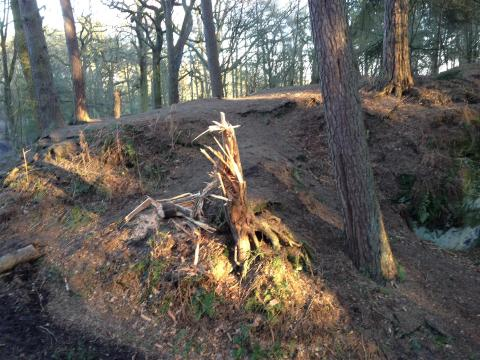 Storm-damaged trees in Alderley Edge 2014