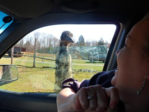 Circle G Ranch Emu scare