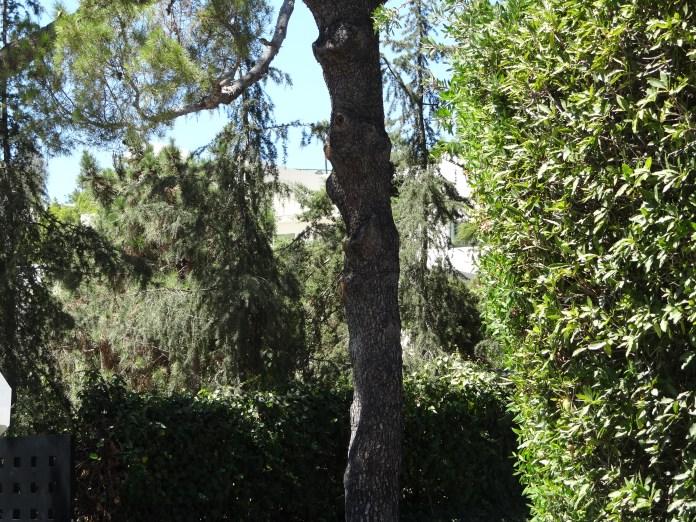 Madonna's Bush
