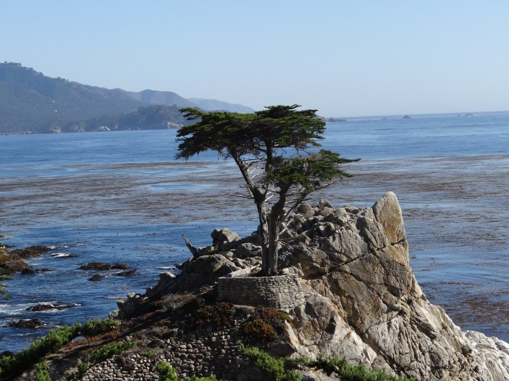 California Road Trip Itinerary - The Lone Cypress