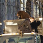 Black Bear captured in Downtown Vancouver (video x photo gallery)