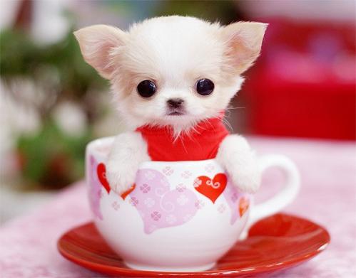 Cute-Dog-2016