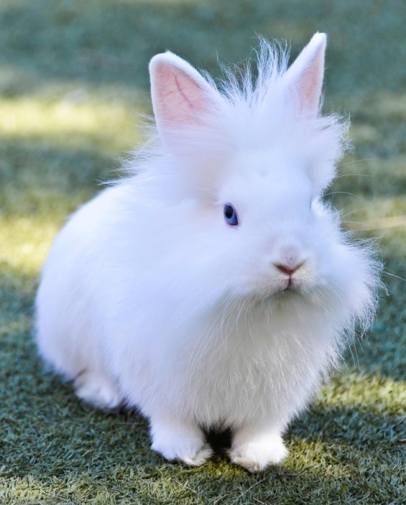 rabbit_