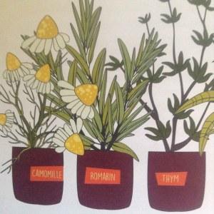 plantes pour tisane