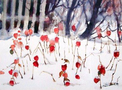 Lampionblumen im Winter