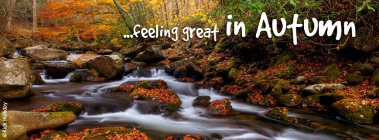 Fall Color in Great Smoky Mountains | 2016 Autumn Color Forecast and Guide
