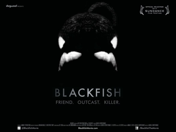 Blackfish UK Quad Poster 585x438 New UK Quad Poster for Hit Sundance Documentary, Blackfish