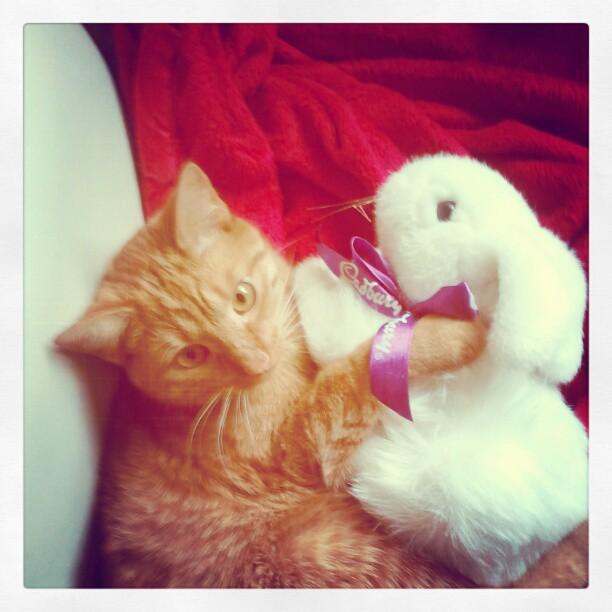 chester with cadbury bunny