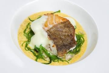 skrei-graupenrisotto-algen-currysud