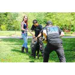 Small Crop Of Dog Trainer Salary