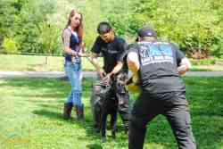 Small Of Dog Trainer Salary