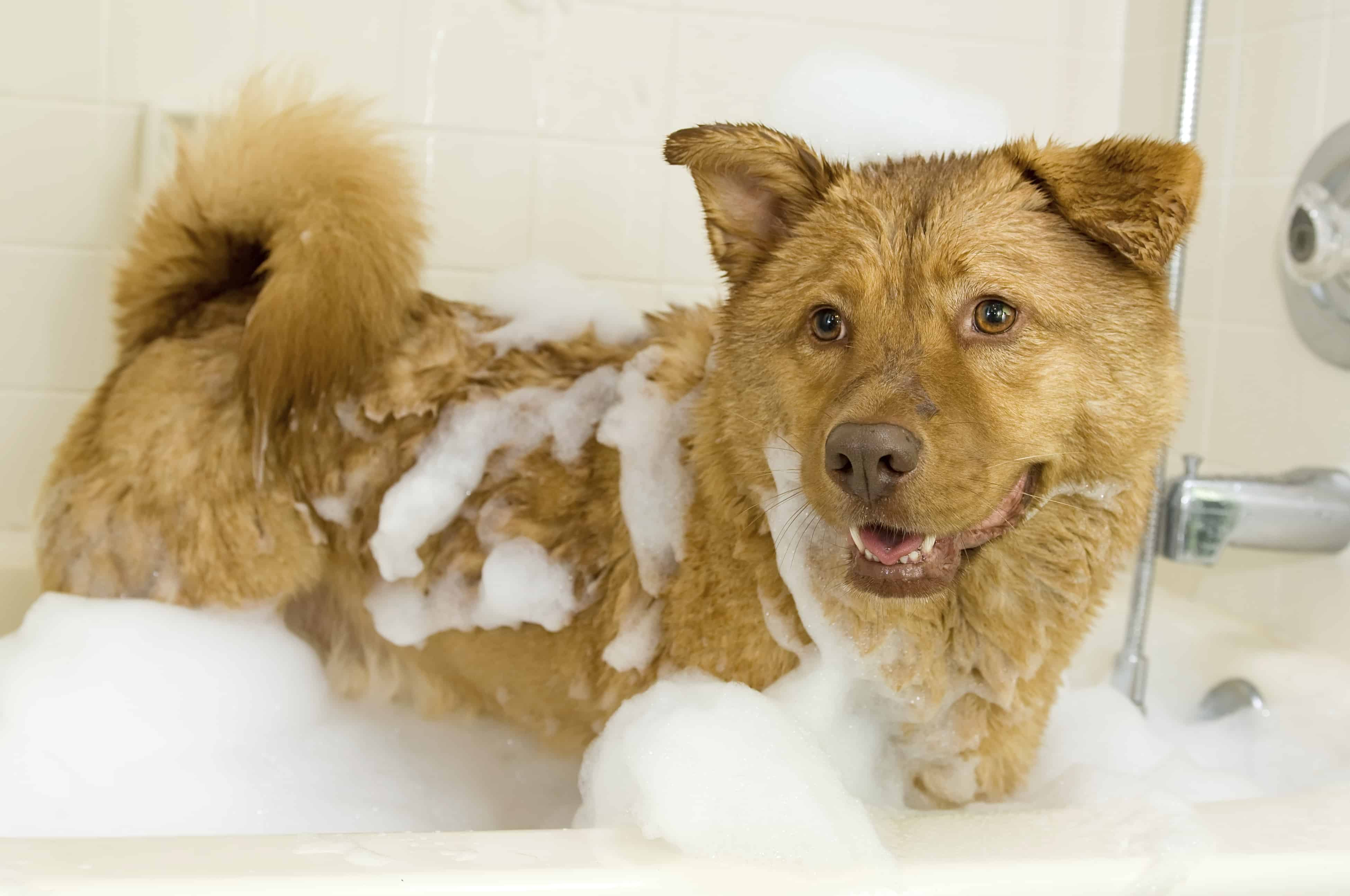 Sleek Itchy Skin How Often Should You Ba A Dog Hotspots I Have A Shaggy How Often Should You Ba Your Dog Dog Grooming Q A Session Dog Police Dog Trainer School How Often Should You Ba A Dog bark post How Often Should You Bathe A Dog