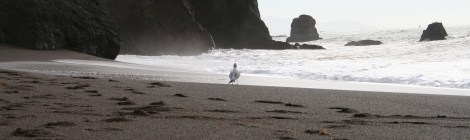 Seagull on Tennessee Valley beach