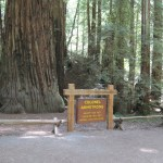 The park's oldest redwood, Colonel Armstrong Tree, is estimated to be more than 1,400 years old.