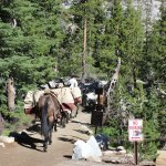 Mules bring supplies to the High Sierra Camps