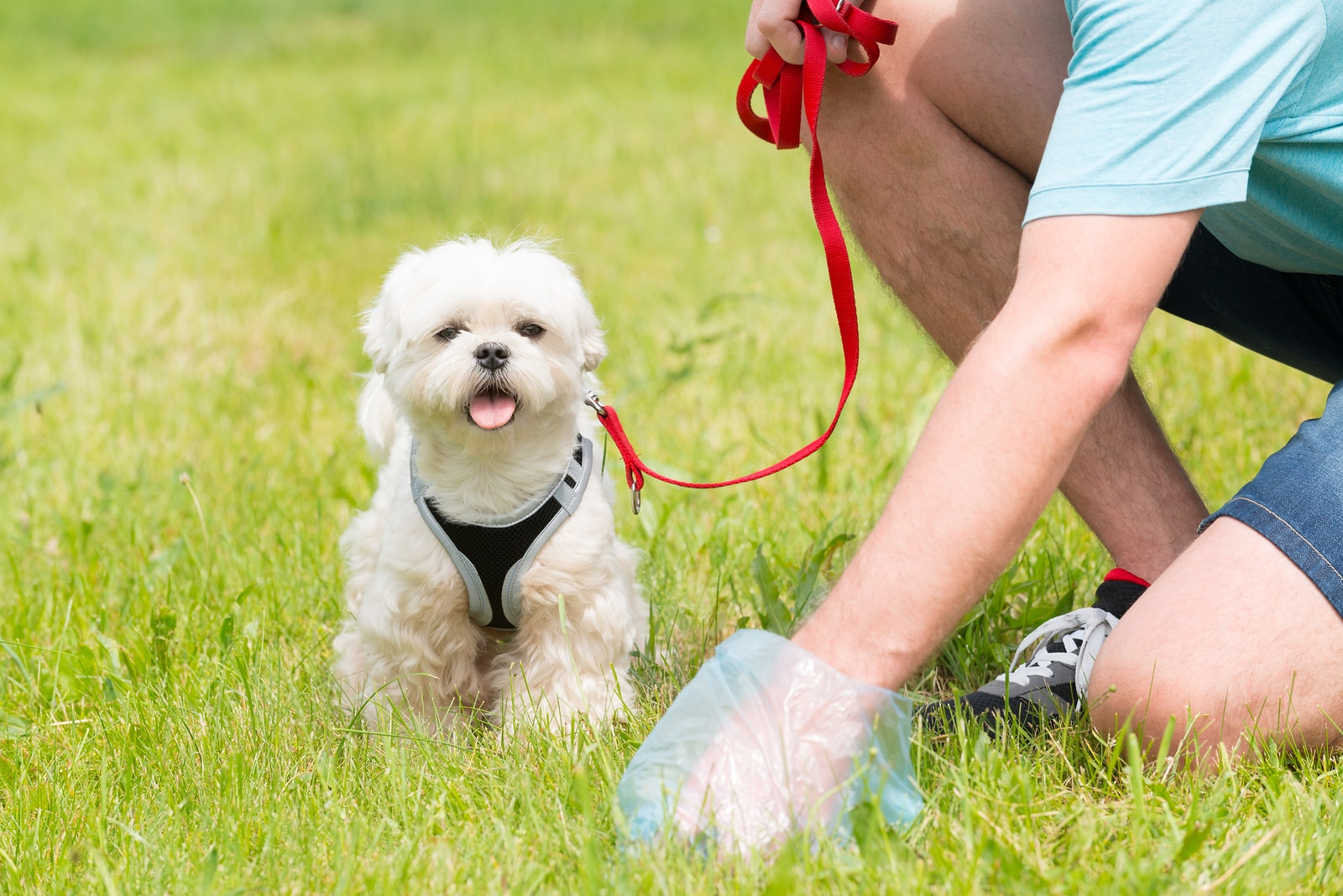 Diverting When To Be Alarmed By Your Poop Is My Poop Pet Why Do Dogs Roll Rabbit Poop Why Do Dogs Roll Raccoon Poop bark post Why Do Dogs Roll In Poop