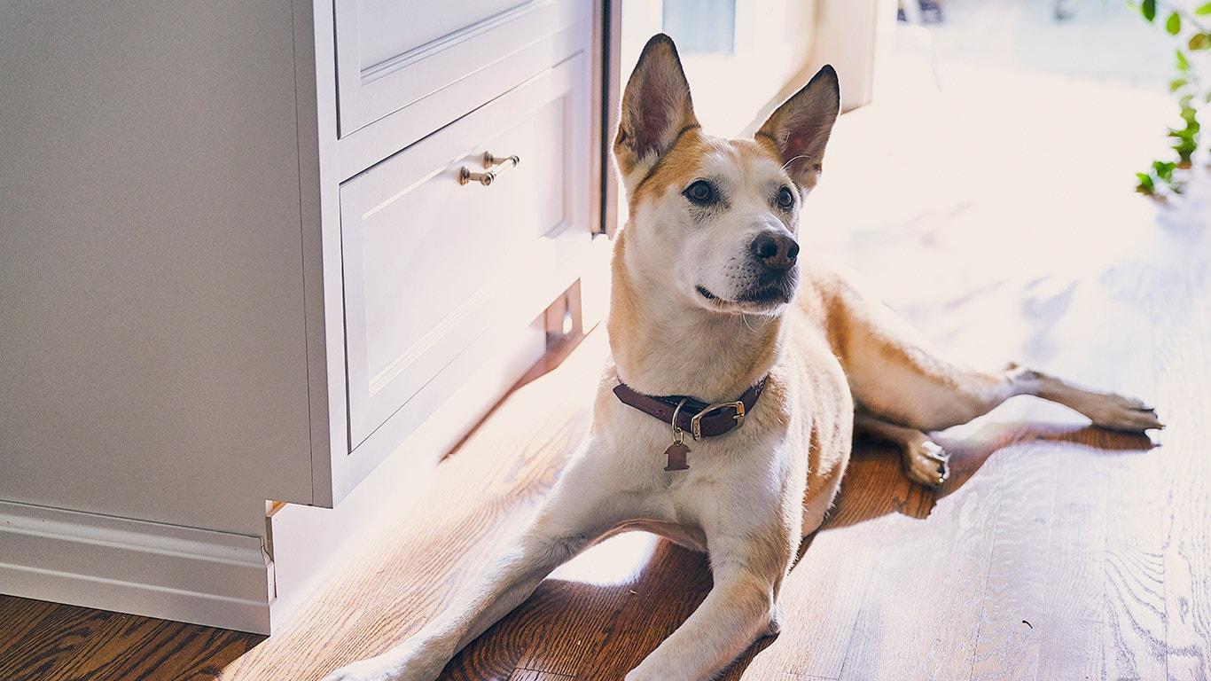 Exciting Hp Pcc Lg Dog Nutrition Hero Dog Iq Test 3 Steps Dog Iq Test At Home bark post Dog Iq Test