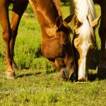 Farm Horse Pictures – Trussville, AL