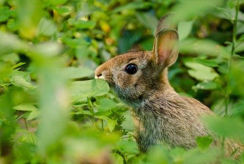 bunny-in-grass-kristin-shoemaker