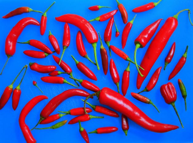 Hot peppers for Instant Tabasco sauce made in the pressure cooker