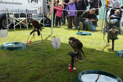 various birds of prey on display at the Todmorden Agricultural Show