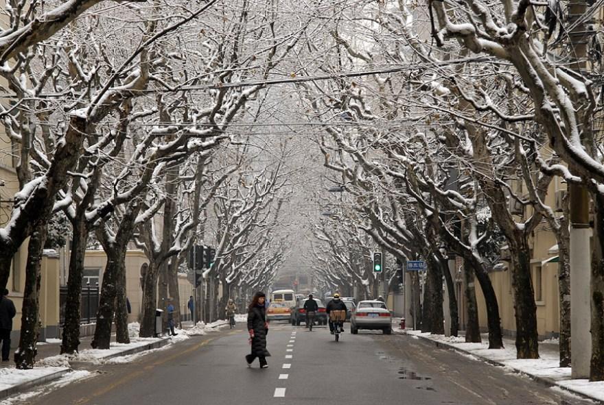 2008 01 29 snow on R#20E132