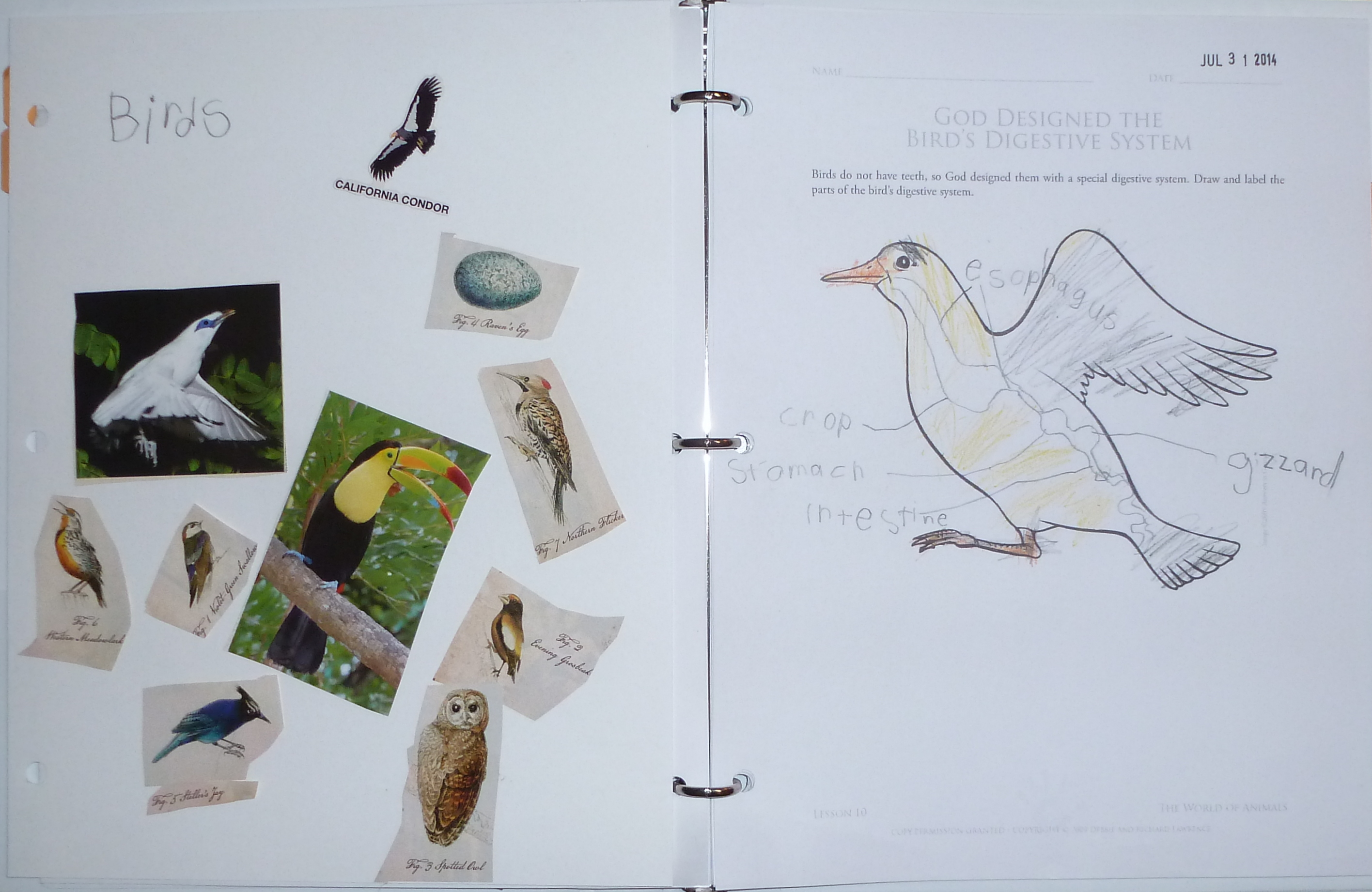 August 2014 his treasure seekers subject a little more we read about birds by cathryn sill paying specific attention to the different kinds of beaks the birds have and life cycle of robcynllc Gallery