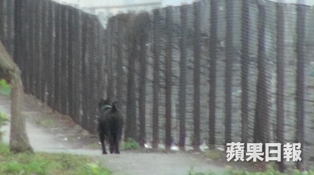 有目擊者指,小黑狗被對男女追打,才吠人自衛。 蘋果日報圖片