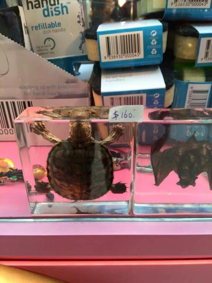 天水圍嘉湖有人出售蝙蝠標本!!!