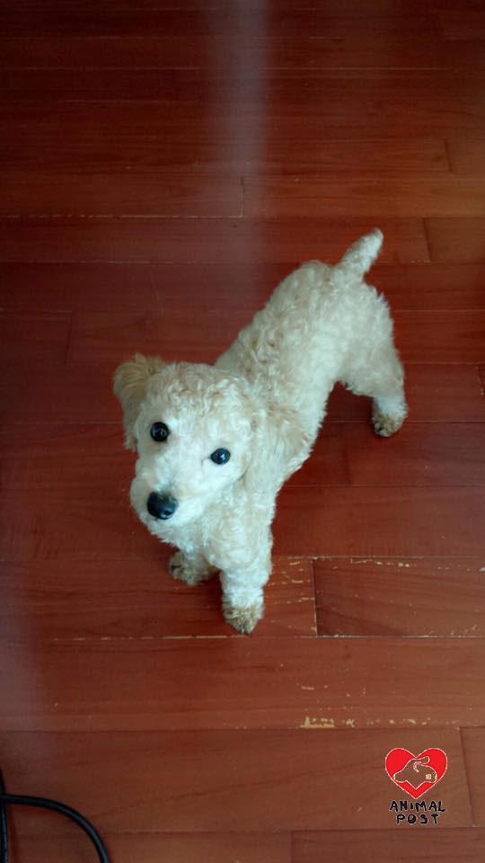 小狗只得3KG,狗主稱牠只是熱情撲向保安員,並非咬人。(讀者提供)