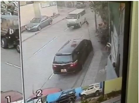 客貨車撞倒其中一隻唐狗。