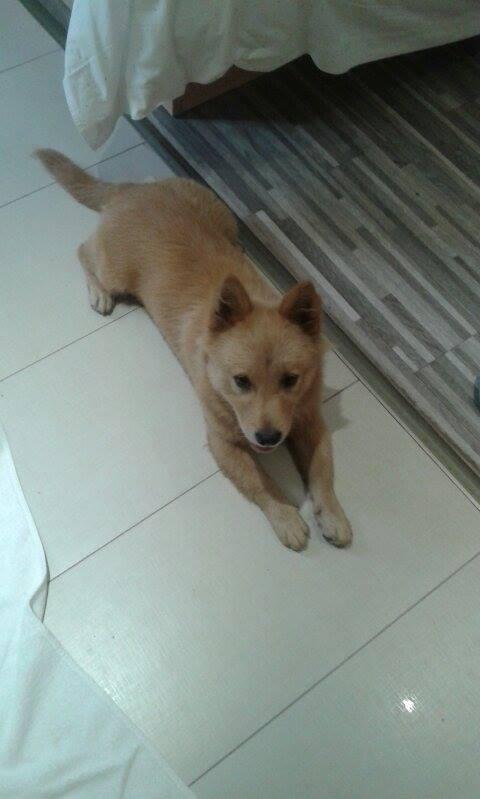 小狗在酒店洗澡後。