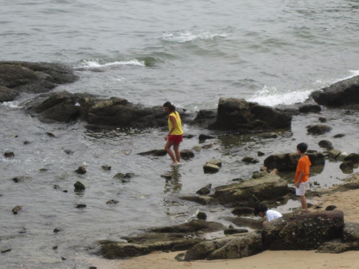 救生員與泳客救龜