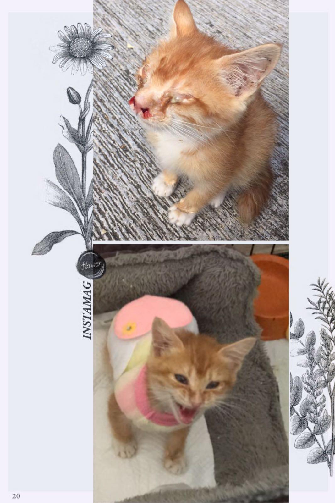 大埔貓BB是生命小鬥士。 相片由ROSA提供