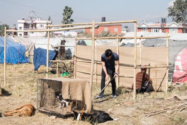 Arvis和Jerry幫忙建設適合小狗生活的臨時居所。