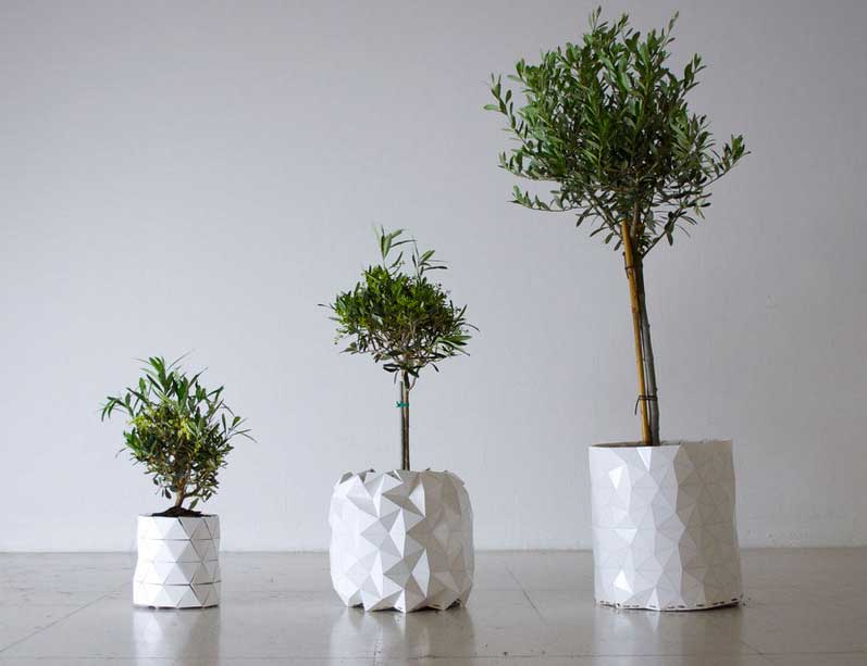its smooth surface in which the plastic panels are folded back over themselves. These then unfold and becomes more angular as the plant begins to grow, resulting in a more geometric appearance