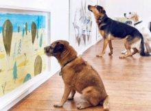 Milenio-noticias-arte_contemporaneo_perros-arte_para_perros-Londres_MILIMA20160823_0230_11