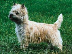 Small Of Longest Living Dogs