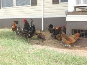Beautiful Flock