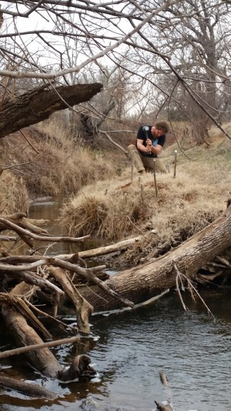 """Willow stakes are """"planted"""" on the inner curve of the creek, near the water"""