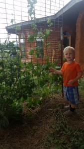 boy in front of beans on trellis