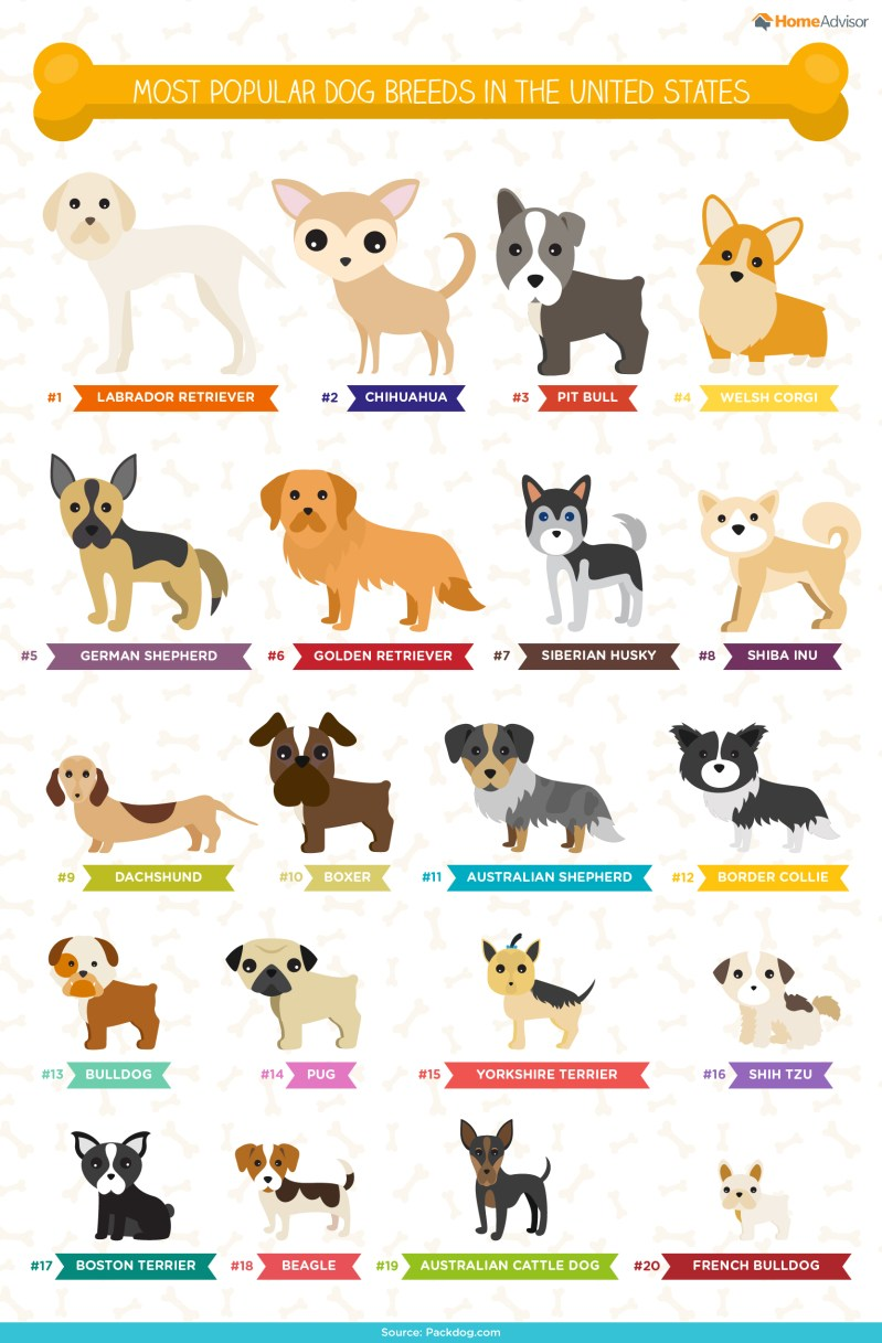 Large Of German Names For Dogs