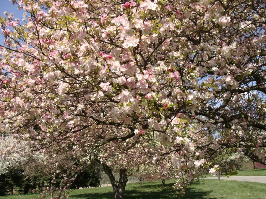 Visit An Arboretum And Save Dollars On Your Landscape