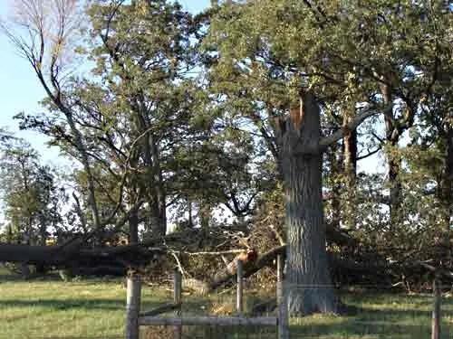 Trees Talk